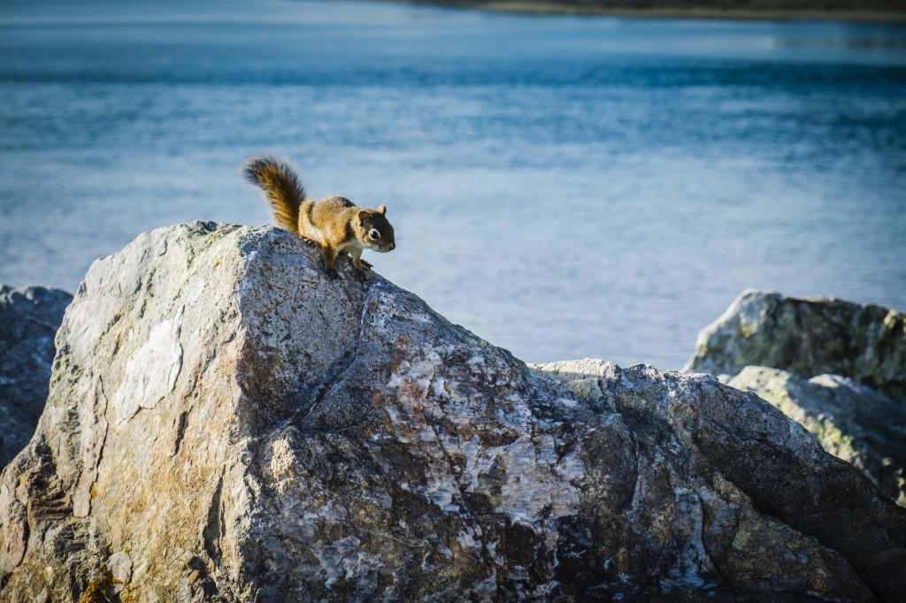 Squirrel, Mira Gut, NS