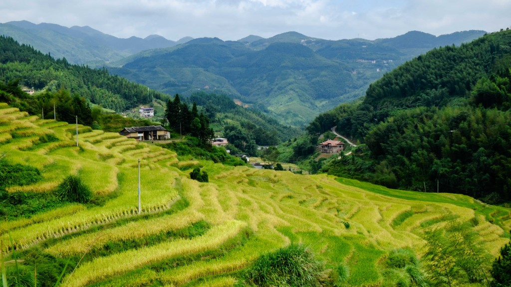 A rice terrace overlooking the deep valley below